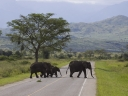 Oeganda_-_Queen_Elizabeth_National_Park_-IMG_3294.jpg