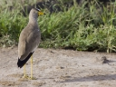 Oeganda_-_Queen_Elizabeth_National_Park_-IMG_3350.jpg