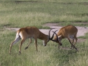 Oeganda_-_Queen_Elizabeth_National_Park_-IMG_3381.jpg