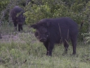 Oeganda_-_Queen_Elizabeth_National_Park_-IMG_3418.jpg