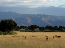 Oeganda_-_Queen_Elizabeth_National_Park_-_IMG_0-8271.jpg