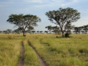 Oeganda_-_Queen_Elizabeth_National_Park_-_IMG_1952.jpg