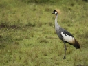 Oeganda_-_Queen_Elizabeth_National_Park_-_IMG_2847.jpg