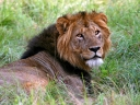 Oeganda_-_Queen_Elizabeth_National_Park_-_IMG_3260.jpg