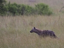 Oeganda_-_Queen_Elizabeth_National_Park_-_IMG_3512.jpg