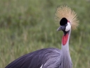 Oeganda_-_Queen_Elizabeth_National_Park_-_IMG_3597.jpg